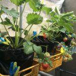 野菜の成長